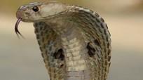 10 loài động vật dễ gây chết người nhất