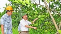 Thanh Chương: Tập trung phát triển những cây trồng chủ lực