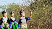 Vẻ đẹp cuốn hút của thiếu nữ Mông nơi 'đại ngàn' xứ Nghệ