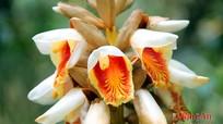 Khu Bảo tồn thiên nhiên Pù Hoạt qua lăng kính 'vạn hoa'
