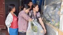 Nghệ An: Nhà máy dứa không liên kết với nông dân bao tiêu sản phẩm