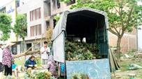 Tiểu thương thành phố Vinh 'ủng hộ' dứa Quỳnh Lưu