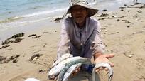 Formosa có thể bị xử lý hình sự nếu gây ô nhiễm làm cá chết hàng loạt