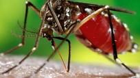 Virus Zika: WHO cảnh báo về nguy cơ lây lan ở châu Âu