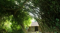 Khám phá nhà cổ 300 năm tuổi ở Nghệ An