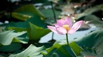 Cùng ngắm những loài hoa đua nhau khoe sắc ở Kim Liên - Nam Đàn