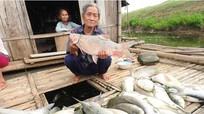 Báo cáo Thủ tướng vụ cá chết trên sông