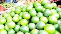 Nghệ An: Giá chanh tăng gấp đôi đầu mùa nắng