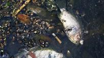 Hà Nội: Nước hồ đổi màu, cá chết nổi lên mặt nước