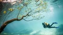 Áo: Hi hữu nước hồ đổi màu vì nước tiểu của khách du lịch