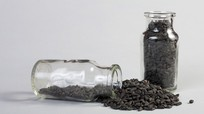 Mỹ phát hiện hạt giống hoa nguy hại hơn ma túy