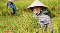 Nghệ An: Nông dân 'chạy đua' với vụ hè thu