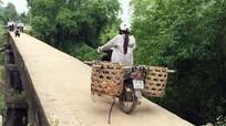 Cầu 'bò' được lắp đặt lan can bảo vệ