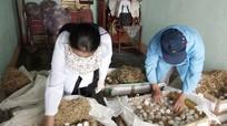 Bắt giữ 7.000 quả trứng vịt lộn không rõ nguồn gốc từ Thanh Hóa vào Nghệ An