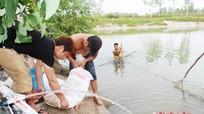 30.000 con cá rô phi chất lượng cao được thả nuôi ở Nghệ An