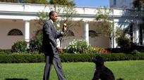 Thăm khu vườn trong 'nhà' Tổng thống Obama