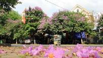 Những con đường hoa ở phố núi Quế Phong