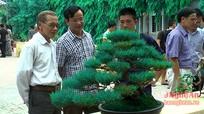 Những loài bonsai quý của làng cây cảnh Nghệ An