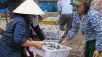 Quỳnh Lưu (Nghệ An) xuất khẩu trên 6.000 tấn hải sản