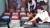 Nghệ An: Bắt giữ 8.000 quả trứng vịt lộn không rõ nguồn gốc