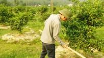 Nghị quyết về dồn điền, đổi thửa phát huy thực tế ở Nghi Lộc