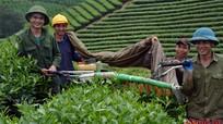 'Mạc Điền Tea',  thương hiệu chè thơm ngon của Hùng Sơn