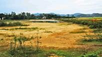Chuyển đổi cây trồng vụ hè thu: Giải pháp cấp thiết đối phó với hạn hán
