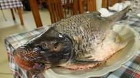 3 loài cá đặc sản đắt đỏ hiếm có