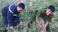 Nghệ An: Cảnh sát phòng cháy giúp dân thu hoạch lạc