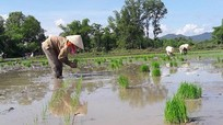 Quỳ Hợp phấn đấu gieo cấy hơn 2.600 ha lúa