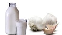 Cho tỏi vào sữa để trị bách bệnh