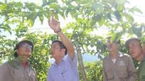 Huyện Quế Phong với quyết tâm xóa đói giảm nghèo