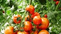 6 lĩnh lực nông nghiệp được quy định điều kiện đầu tư kinh doanh