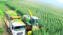 Tập trung quy hoạch, phát triển chuỗi nông sản thực phẩm có lợi thế