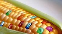 107 học giả đạt giải Nobel kêu gọi thế giới dừng phản đối cây trồng biến đổi gen