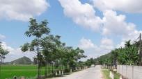 Nghệ An: Người phụ nữ tử vong bên đường nghi do TNGT