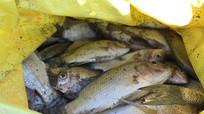 Khoảng 3 tấn cá chết do nắng nóng kéo dài ở tây Nghệ An.