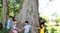 Chiêm ngưỡng những cây cổ thụ hàng trăm năm tuổi ở đình Dương Liễu