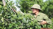 Nghệ An sẽ chuyển đổi trên 5.000 ha đất trồng lúa kém hiệu quả