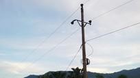 Nghệ An: Người dân chặt cây làm đứt đường điện cao thế làm gần 3.000 hộ mất điện