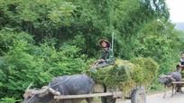 Nghệ An: Xem xét cơ chế hỗ trợ xi măng giao thông nông thôn đối với các địa phương có điều kiện đặc thù