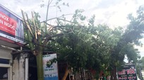 Trận mưa 40 phút kèm lốc xoáy làm cây gãy đổ ngổn ngang ở Anh Sơn