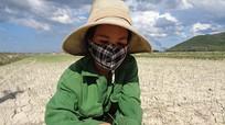 1.200 ha lúa ở Hưng Nguyên héo khô vì hạn