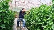 Chàng Thạc sỹ quản lý vườn trồng rau sạch bằng điện thoại