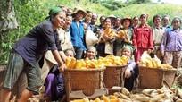 Xem xét các chính sách hỗ trợ giống cây, con cho nhân dân vùng dân tộc thiểu số Nghệ An