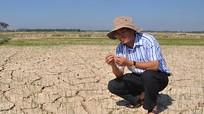 Hưng Nguyên hỗ trợ nông dân chuyển đổi cây trồng trên vùng đất hạn