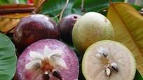 Loại trái cây duy nhất chỉ Việt Nam có, Mỹ phải mua