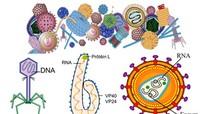 Bạn có biết virút là gì không? Vì sao chúng gây ra thật lắm bệnh?