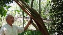 Người sở hữu vườn dược liệu quý hiếm ở miền Tây xứ Nghệ