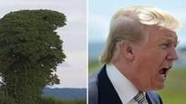 Cây lạ có hình dạng giống hệt tỷ phú Trump đang gào hét